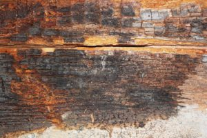 This is dry rot on a wood beam after water infiltration into the home. Call Sierra Remodeling for your dry rot repairs.
