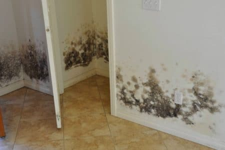 Sierra Remodeling removes mold